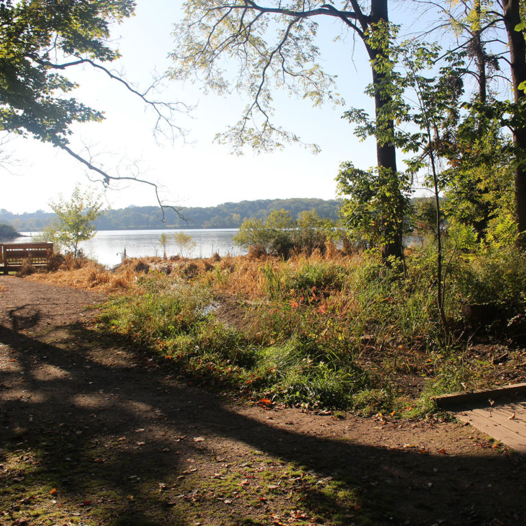 Lookout Point On A Cootes Paradise Trail