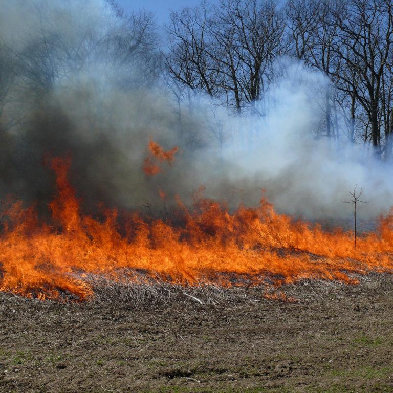 Field Burning at Princess Point