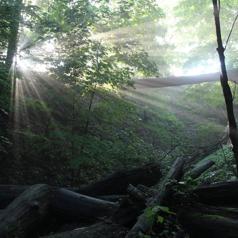 Westdale Forested Ravine