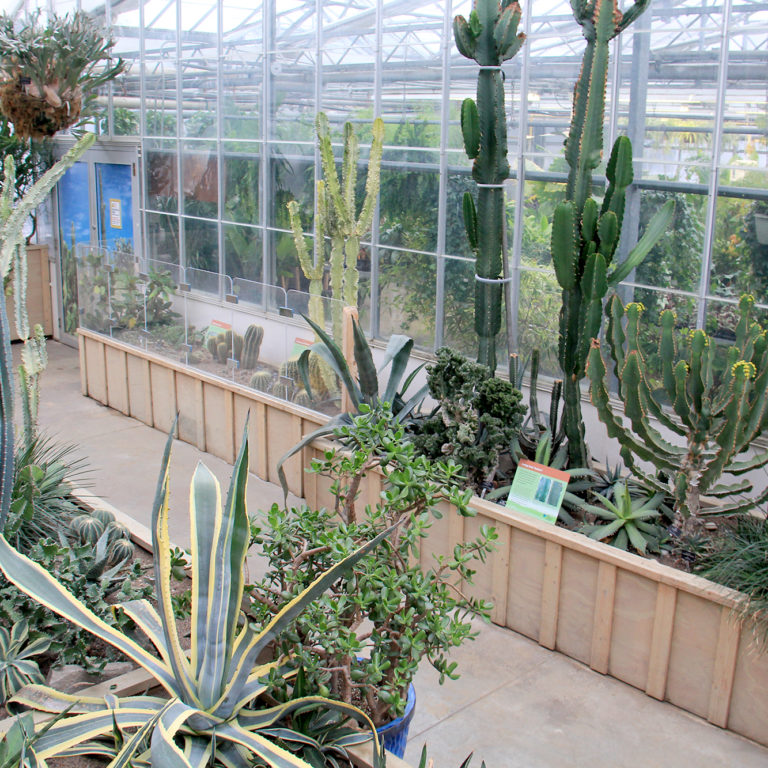 Cacti And Succulent Collection