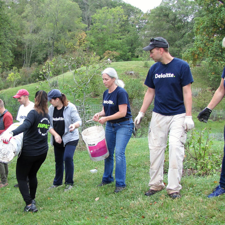 Corporate Volunteers Passing Buckets Of Soil Down A Line
