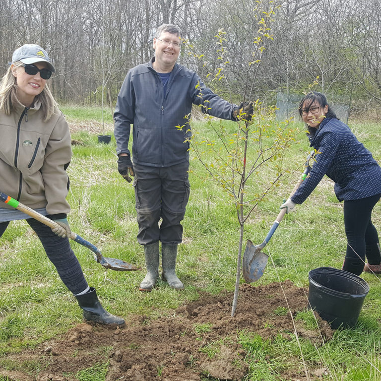 Corporate Volunteers Posing With Newly Planted Tree