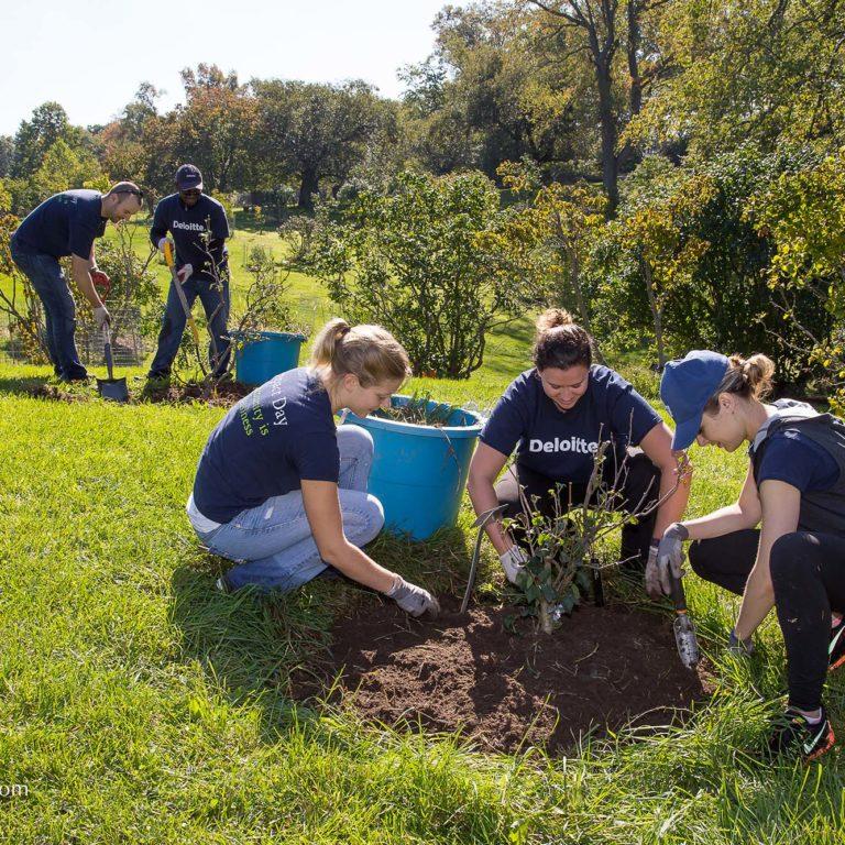 Employee Volunteers Planting Trees Credit Markzelinski.com