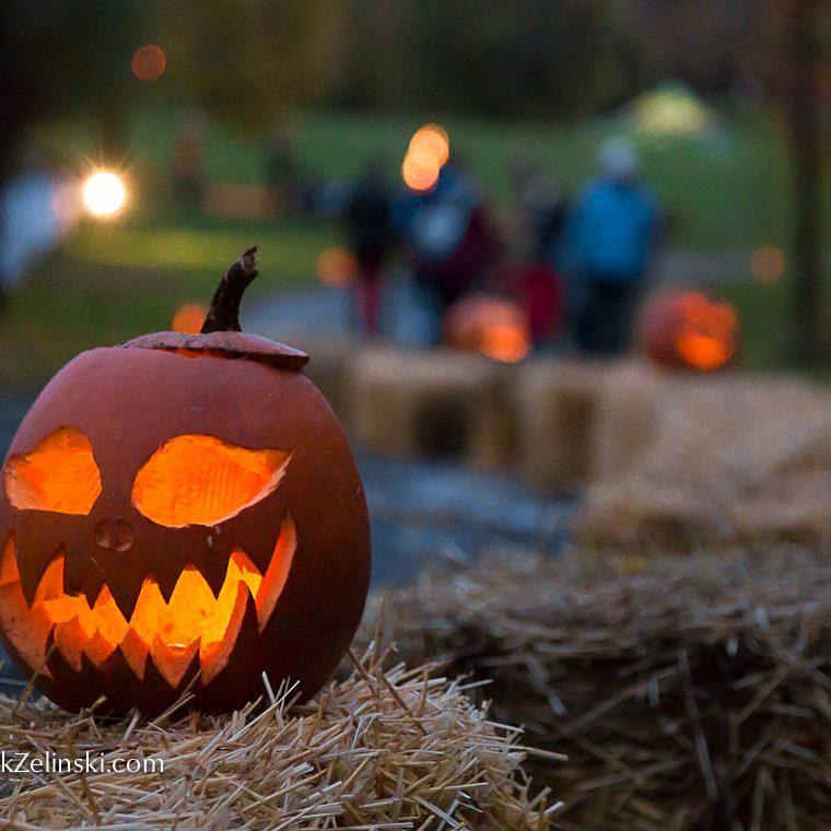 Great Pumpkin Trail Jack O Lantern On Hay Credit Markzelinski.com
