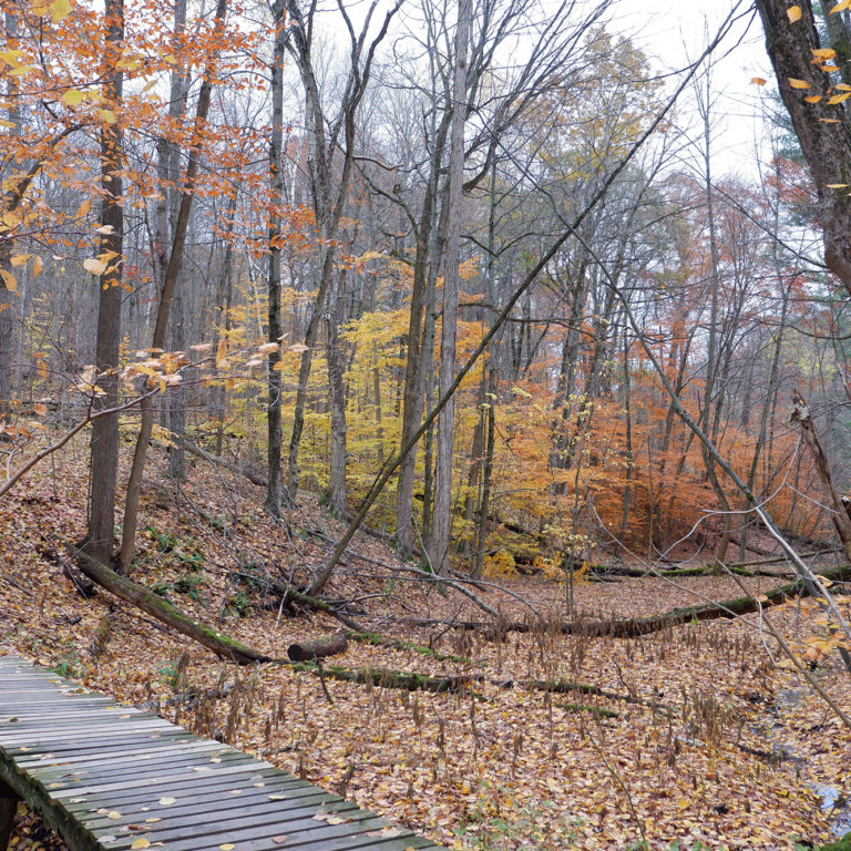 Grey Doe Trail Boardwalk In Fall