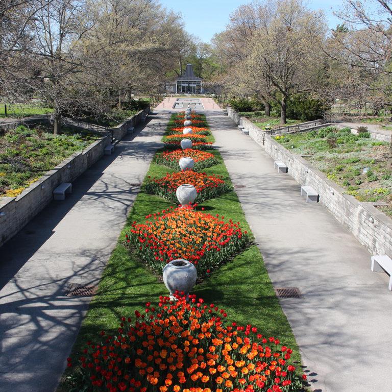Hendrie Park Oak Alee Spring Tulips