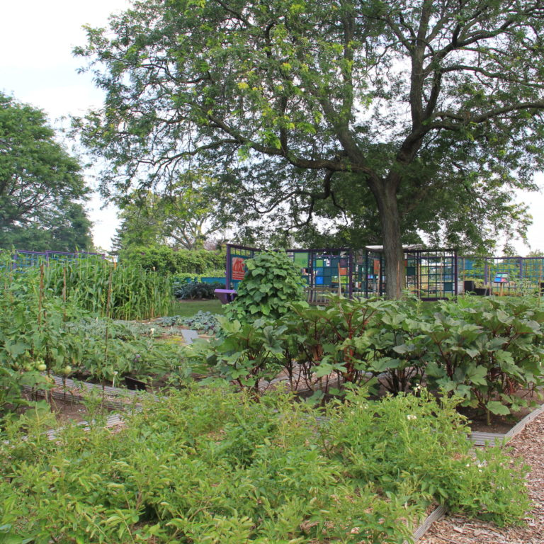 Hendrie Park Veggie Village