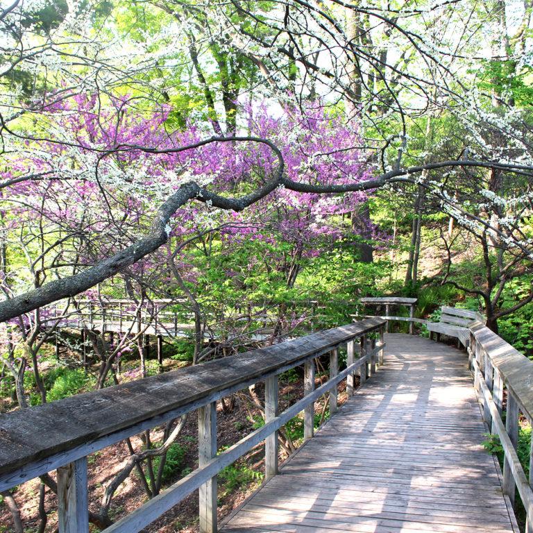 Hendrie Park Woodland Boardwalk In May