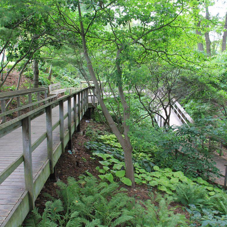 Hendrie Park Woodland Garden Boardwalk