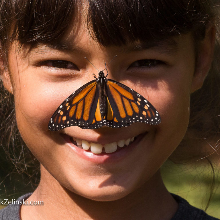 Monarch butterfly on child's nose, Events in Burlington & Hamilton