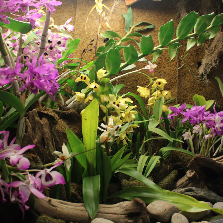 Orchids In Display Case