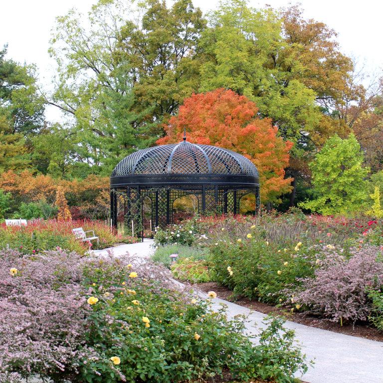 Rose Garden In Fall