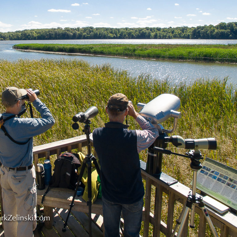 Staff On Marsh Platform Credit Markzelinski.com Looking Through Binoculars