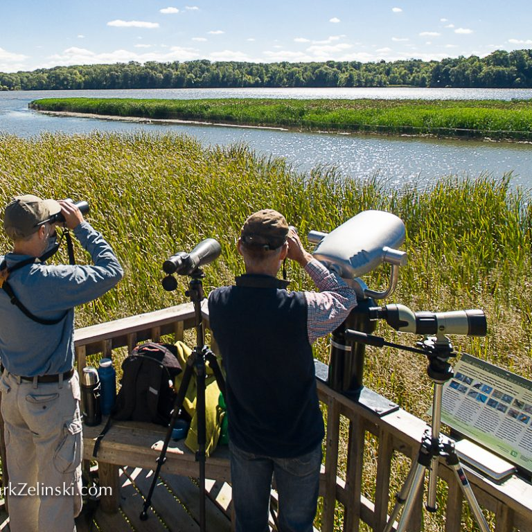 Staff With Bird Watching Equipment On Lookout In Wetlands
