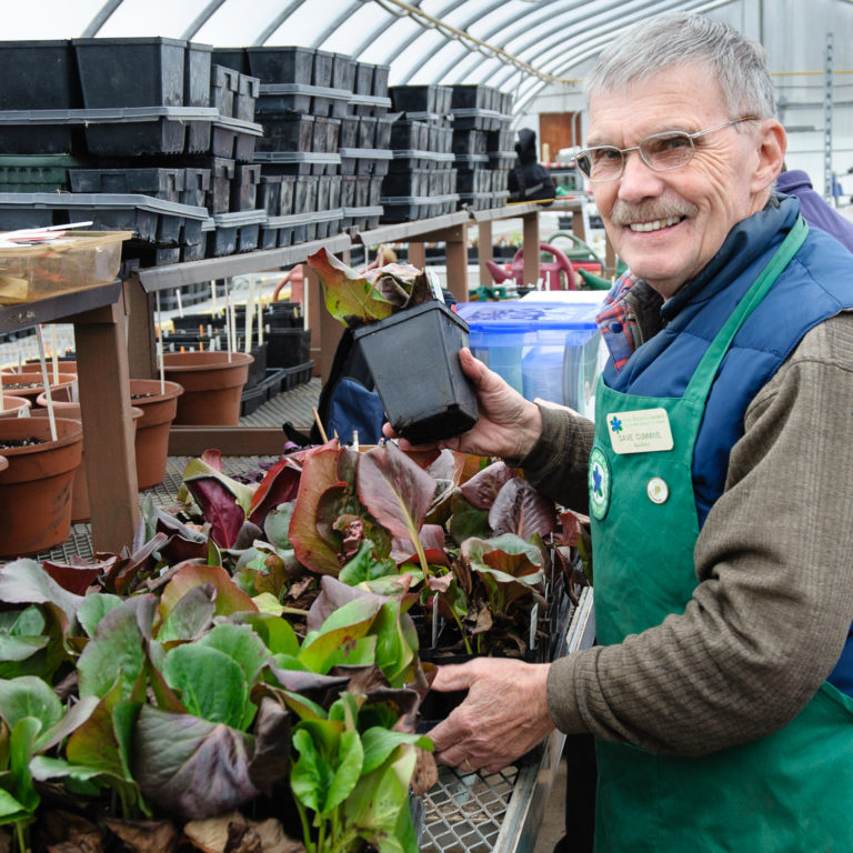 Volunteer Working In Propagation Greenhouse