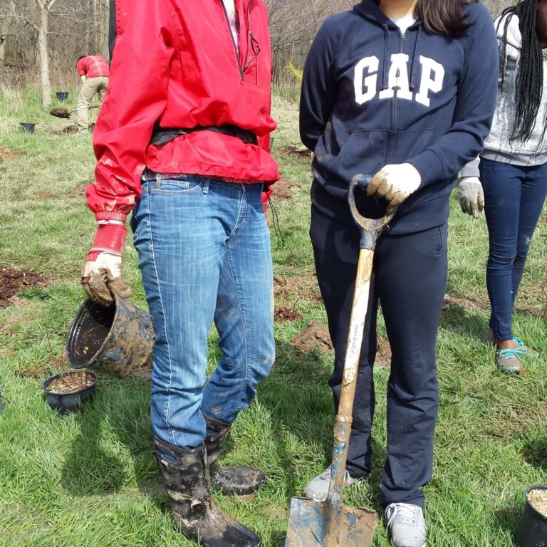 Volunteers Tree Planting In Park