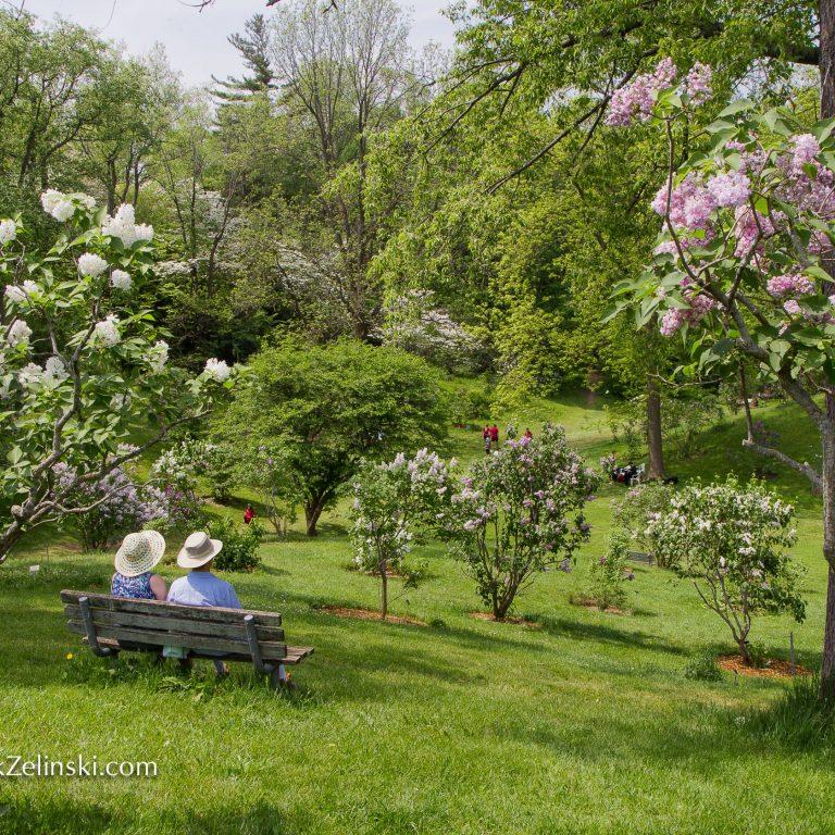 Couple-on-bench-enjoying-arboretum