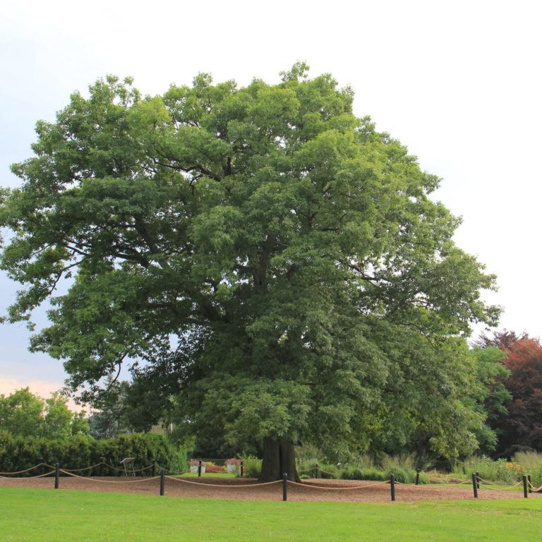 Hendrie Heritage Oak Summer