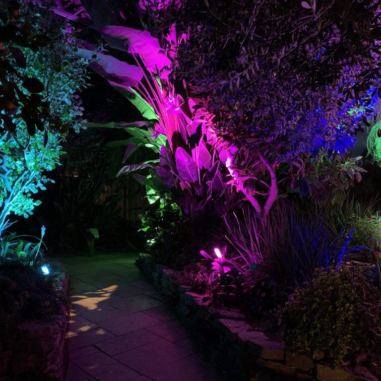 purple, pink, and turquoise lights shining up towardsplants in the Mediterranean garden