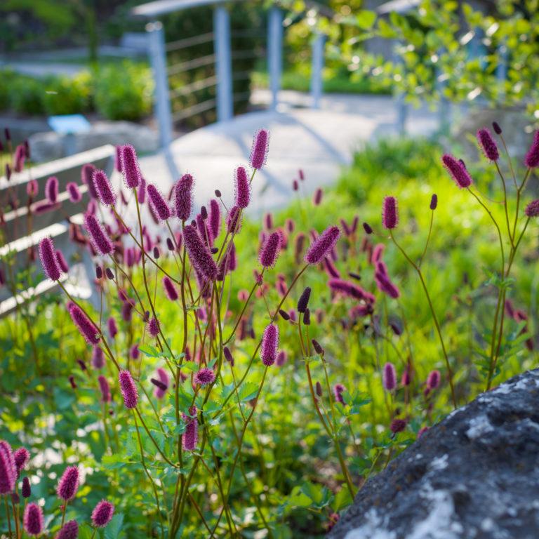 Flowers Overlooking Scenic Bridge