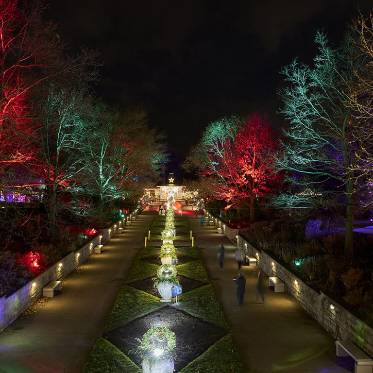 Looking down oak alee lit up for winter wonders