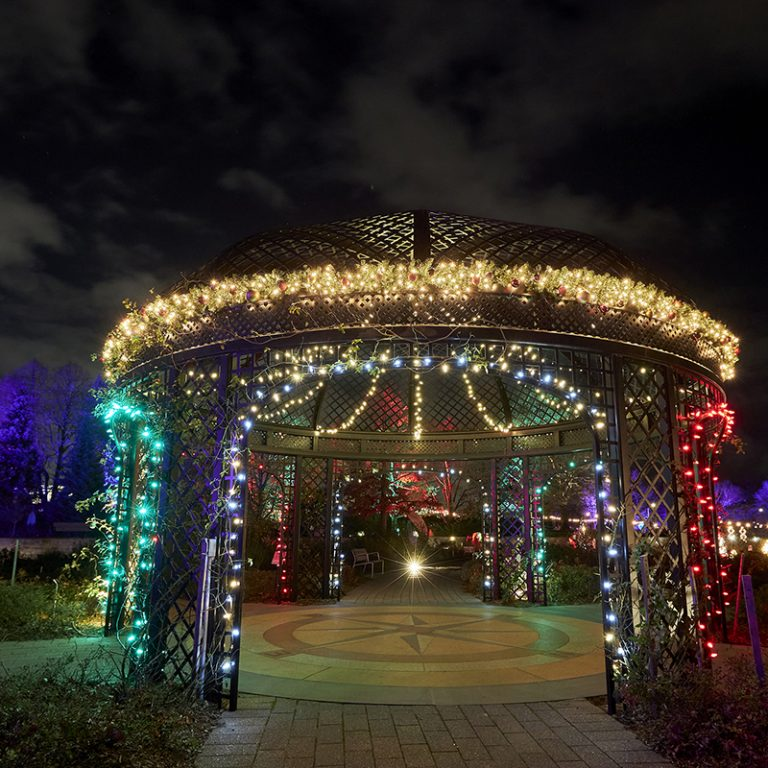 Rose Garden gazebo wrapped in lights during winter wonders