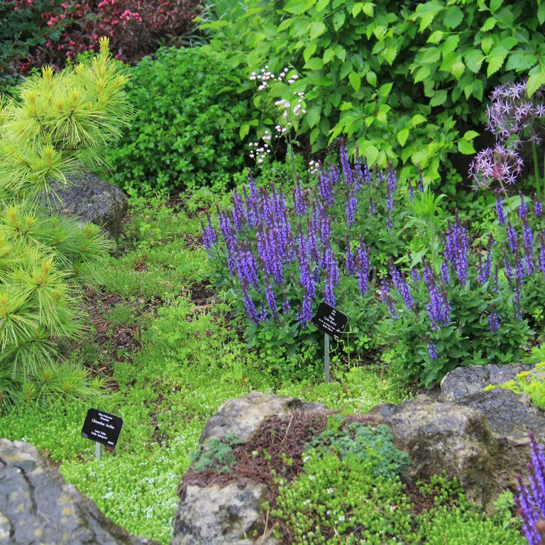 Bed Of Rock Garden Perennials With Labels