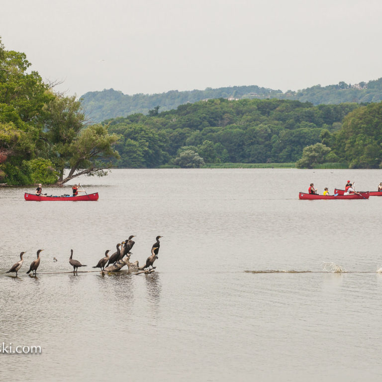 Canoes And Birds On Cootes Paradise Credit Markzelinski.con