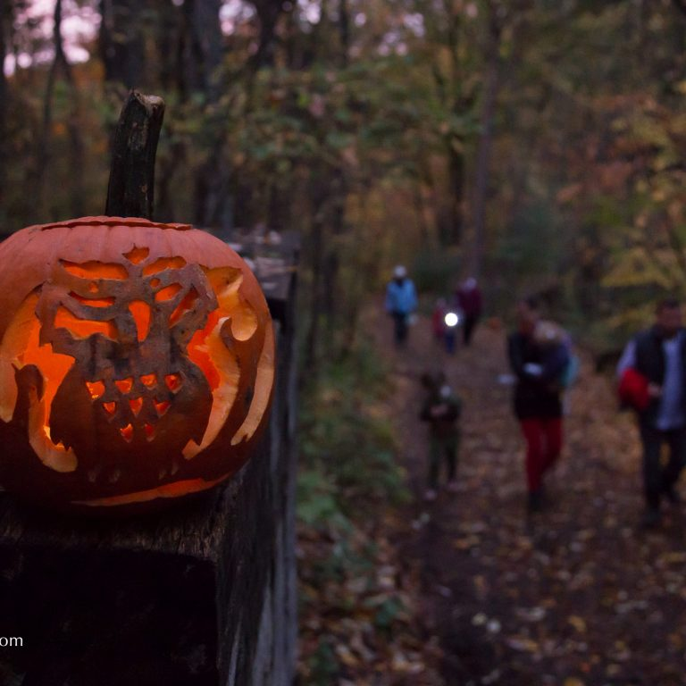 owl carved into jack-o-lantern on hiking trail with visitors in background