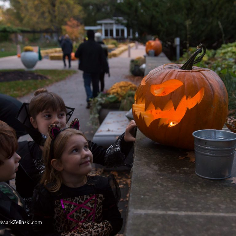 children in costume looking at classic jack-o-lantern
