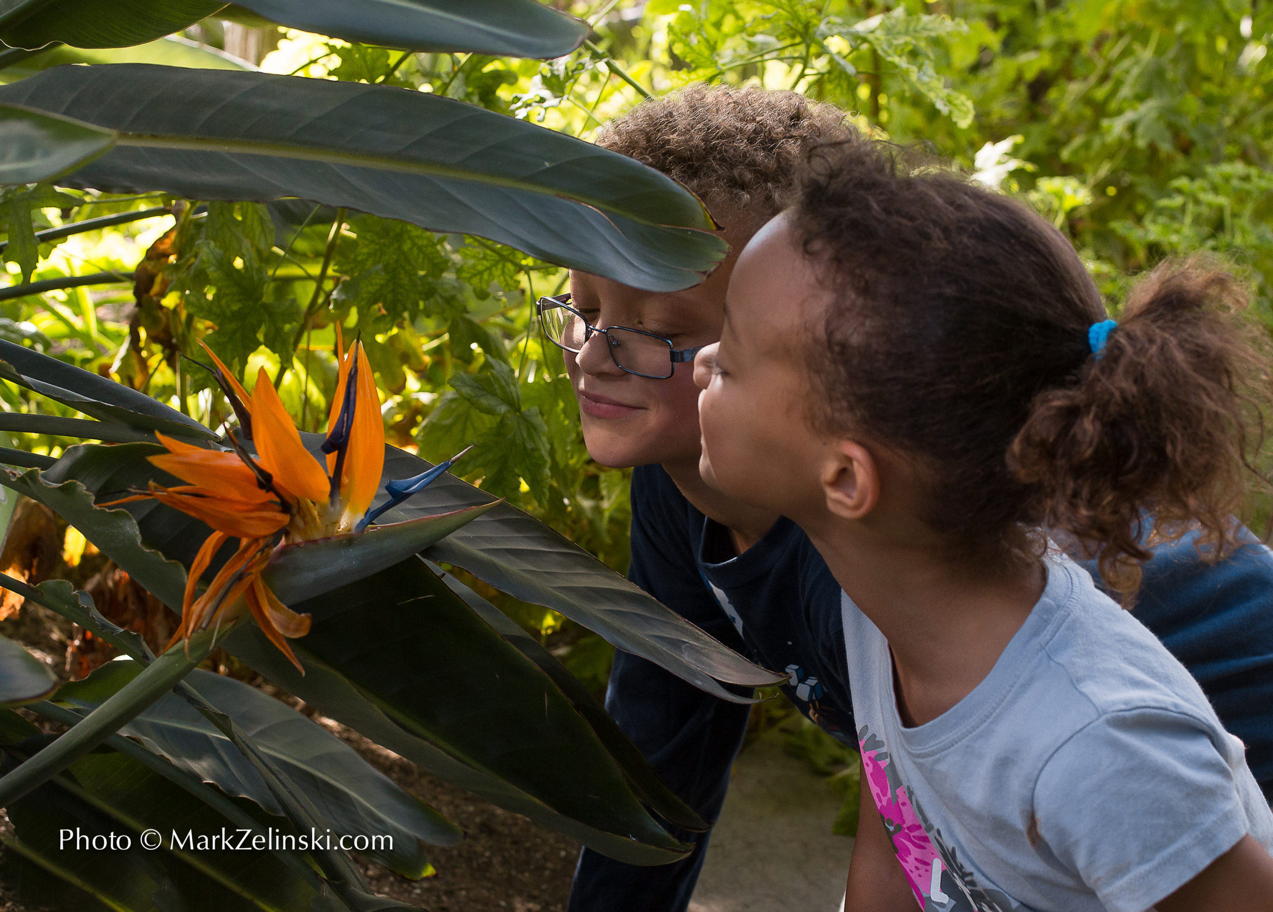 Children Smelling Bird Of Paradise Flower