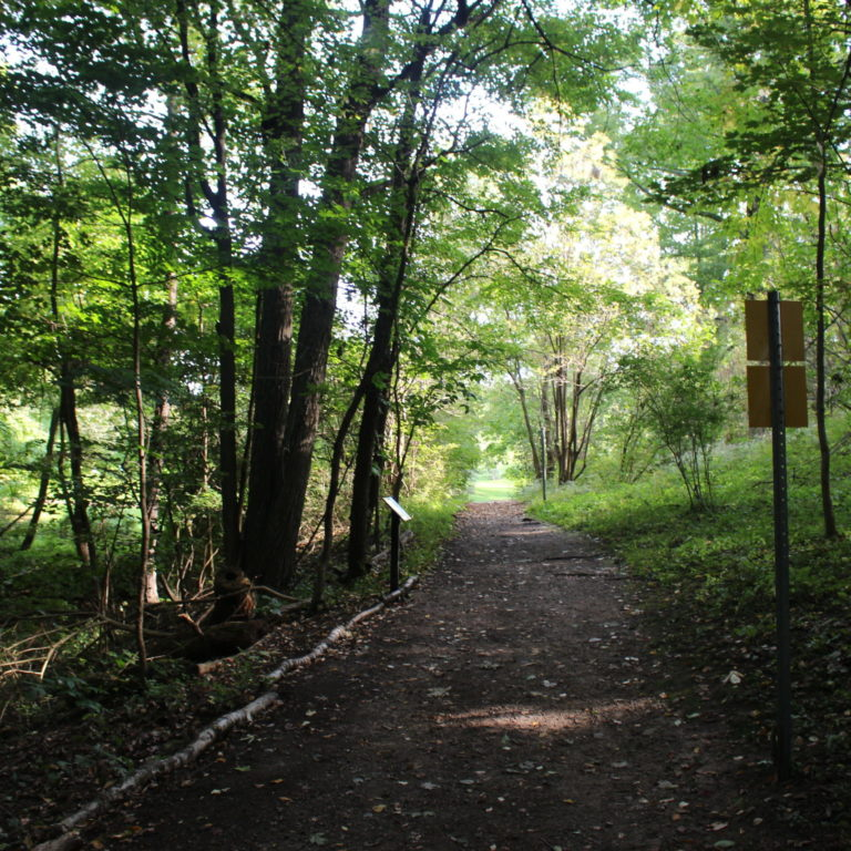Forested Hiking Trail In Summer
