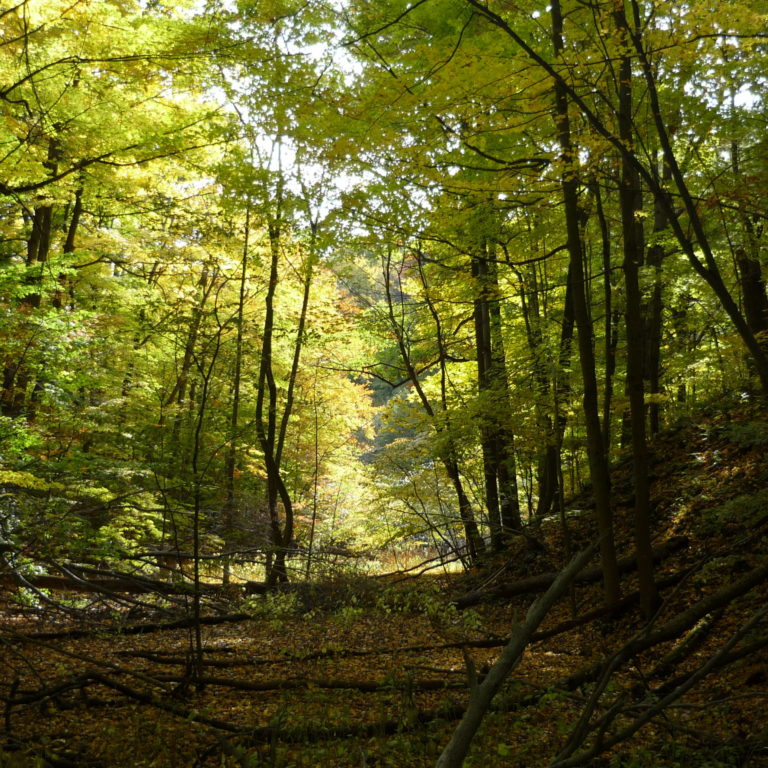 Forested Ravine in Fall