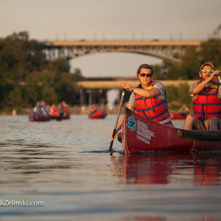 Group Canoeing On Cootes Paradise Credit Markzelinski.com