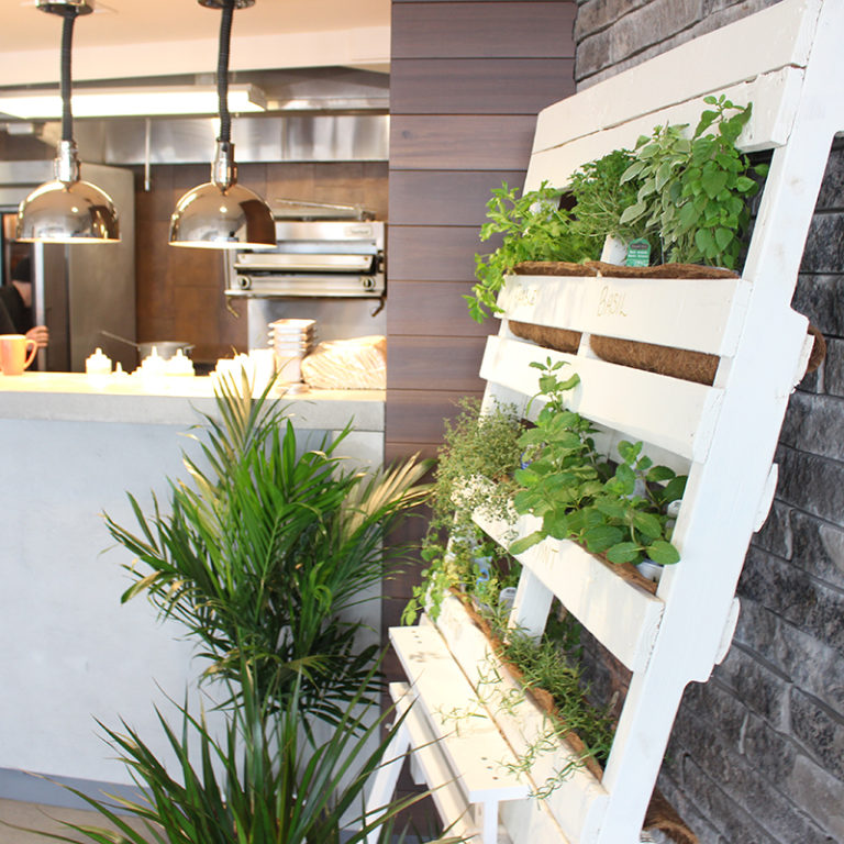 herb display at rock garden cafe