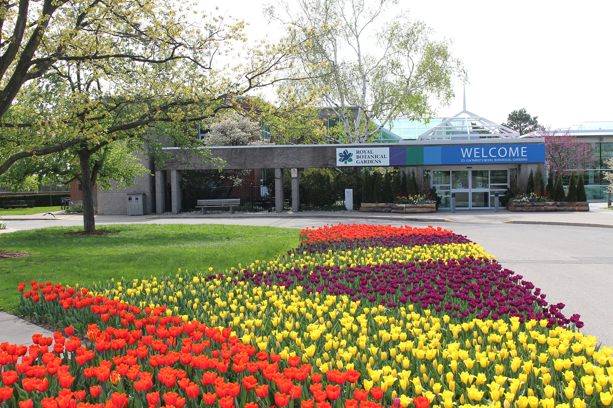 striped tulip display in front of rbg centre - Royal Botanical Gardens 680 Plains Road West Burlington On Canada