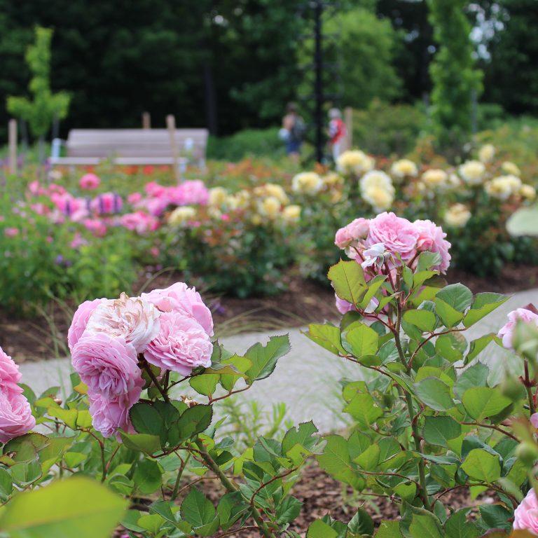 Rose Garden Collection