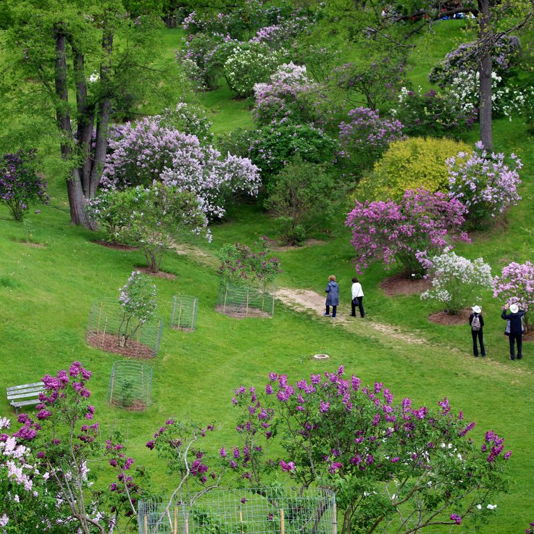Visitors Walking Through Bottom Of Lilac Dell Arboretum