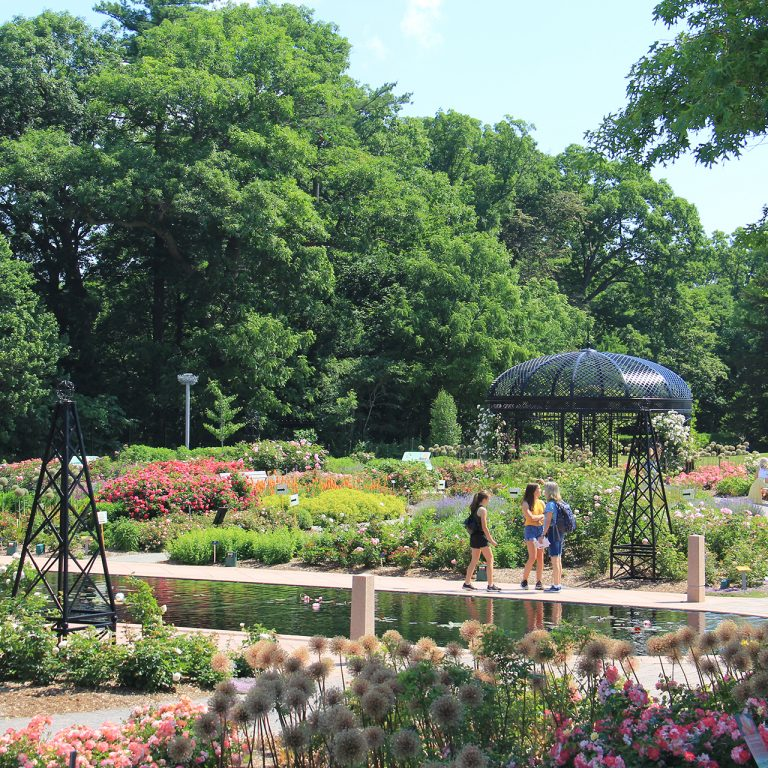 Rose garden in full bloom with visitors strolling along reflecting pond