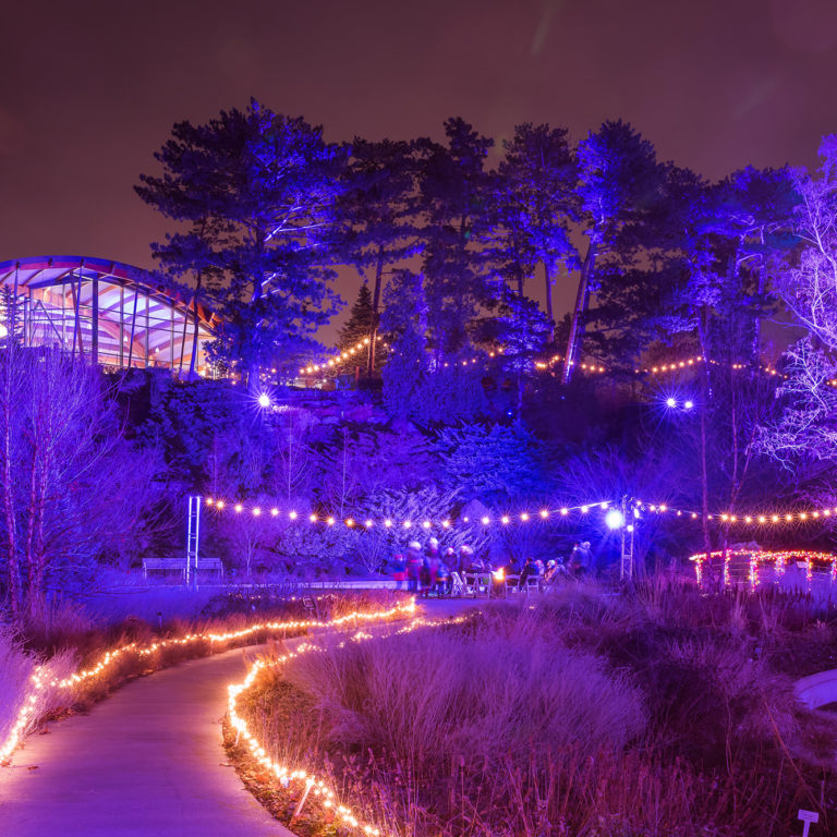 Winter Lights At The Rock Garden Lit At Night