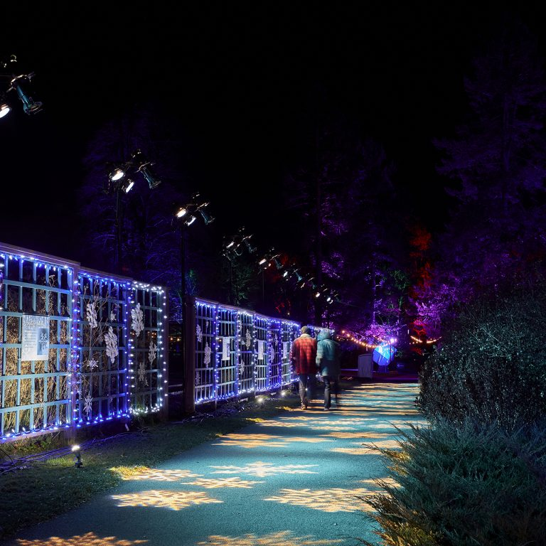Pathway lit with blue and white lights at Winter Wonders
